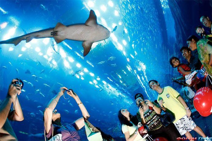 аквариум в Дубай Молле